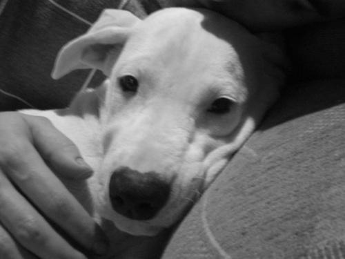 argetin-dog-kutyafajta