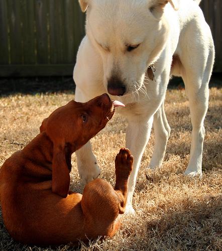 kutya-szocializacio
