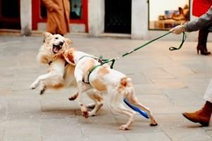 Számos, a kutyát fenyegető veszély megelőzhető!