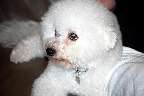 konnyfoltos-kutya