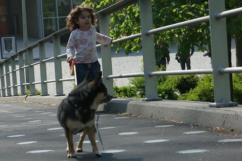kiviszi-a-kutyat
