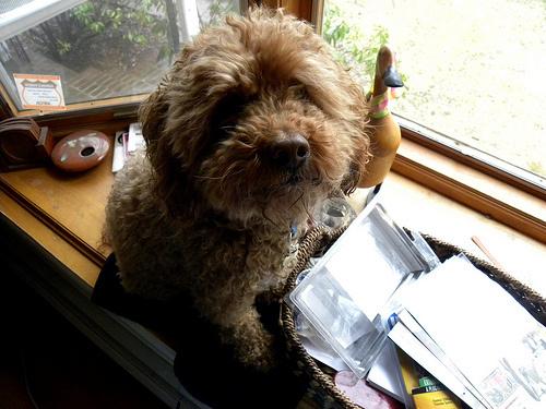 kutya-az-ablakban