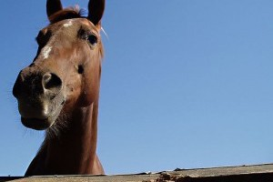 A ló eredete