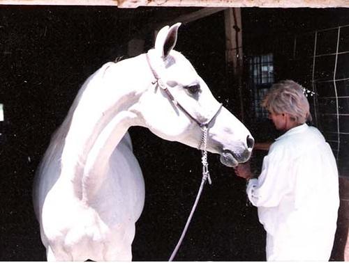 lovaknak-csemege
