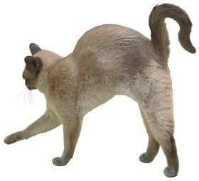 felpupositott-hatu-cica