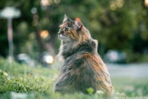 Miért púposítja fel a cica a hátát? - vicces videó