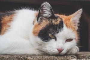 Lehet, hogy letargiás a macskám?