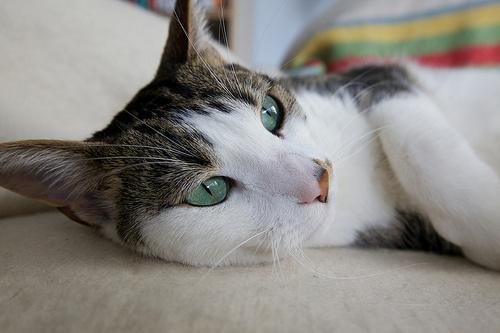 lusta-macska
