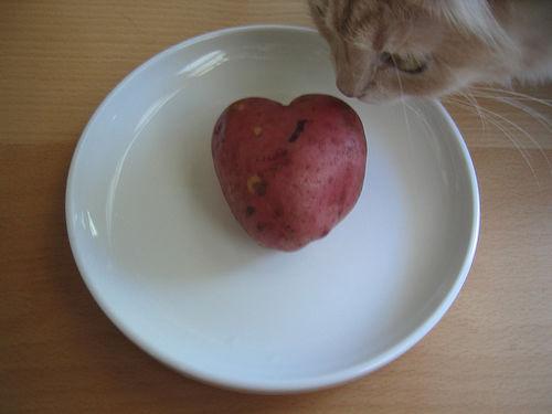 cica-es-krumpli