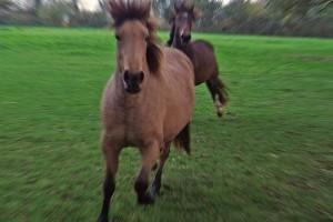 A ló testfelépítése: az alátámasztási rendszer