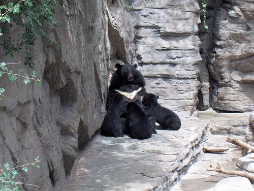 orvos-medve-bocokkal