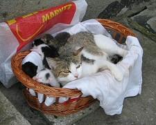 cica, macska, kóbor, állat, hajléktalan