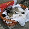Akciós macskák - Ivarzanak a cicák, most jön az igazi szezon