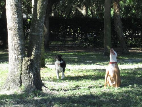 kutyak-a-mokus-utan