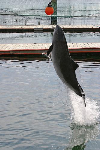 barna-diszno-delfin