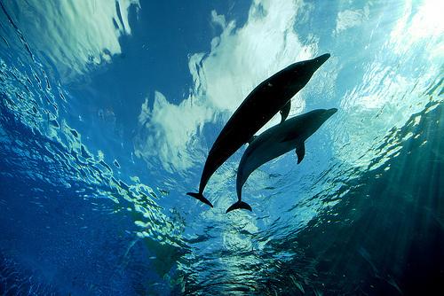 delfin-kepek