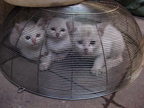 elviheto-cica