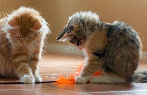 Legjobb macskanevek, cicanevek