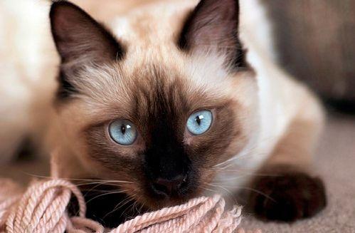 Legjobb macskanevek