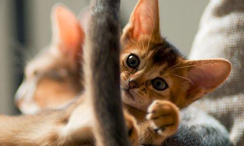 Macskanév, macska neve, cicanév, macskanévnap