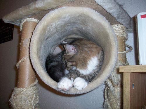 macska-butor