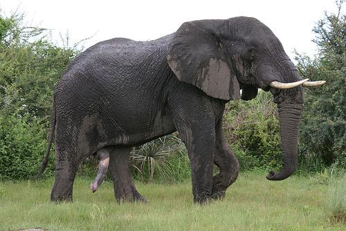 elefant-bika