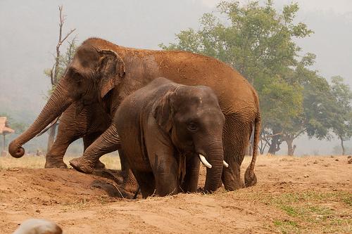 nagy-allatok-elefantok