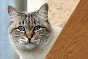 Tudod, hogy mennyi idős a cicád emberi években számolva?