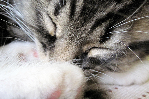cirmi-alszik