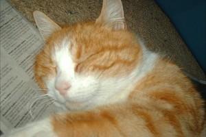 Macskafélék taurin hiánya