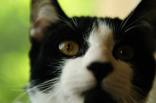 fekete-feher-macska