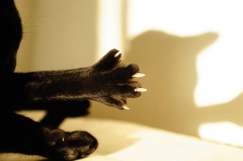 macska-laba