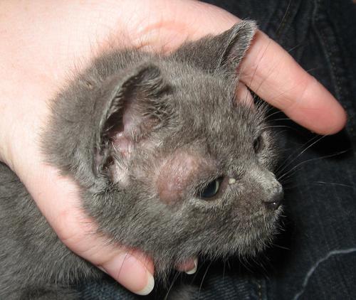 macska-somor
