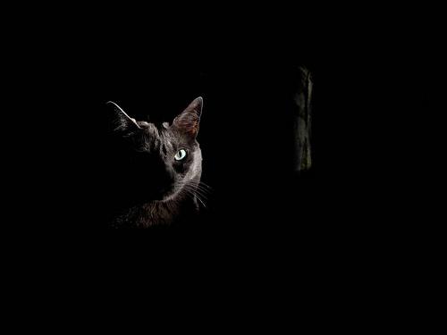 cicas-kepek-macska-a-sotetben
