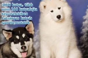 CACIB 2010! Nemzetközi Kutyakiállítás és Kisállatfelszerelés vásár!