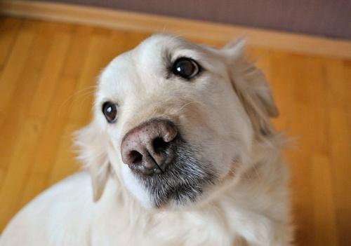 kutya_felelem2