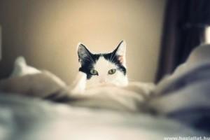 Amikor a macska az ébresztőóra