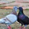A sikeres madártenyésztés - Továbbra is csak természetesen!