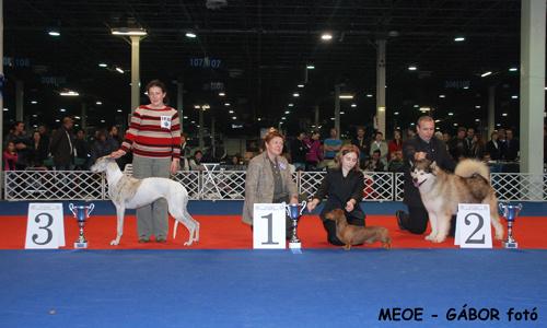 hungexpo-kutyakiallitas-2010