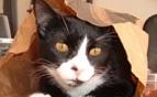 cica-a-szatyorban