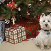 Kutyát karácsonyra?