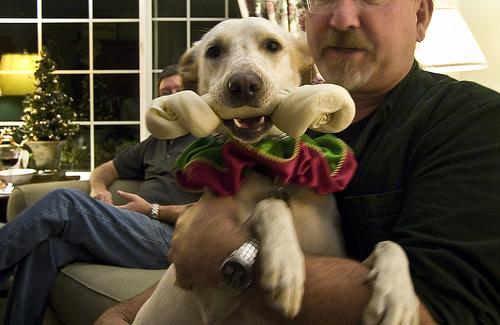 kutyanak-csont