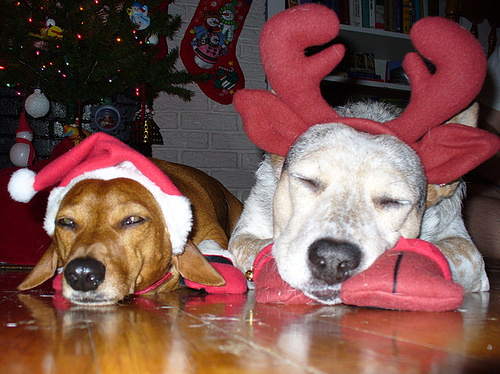 karacsonyi-kutyak