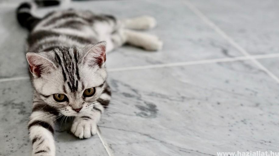 Olcsó és egyszerű macskajátékok - készítsd el házilag!