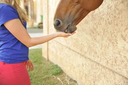horse-2464220_1280