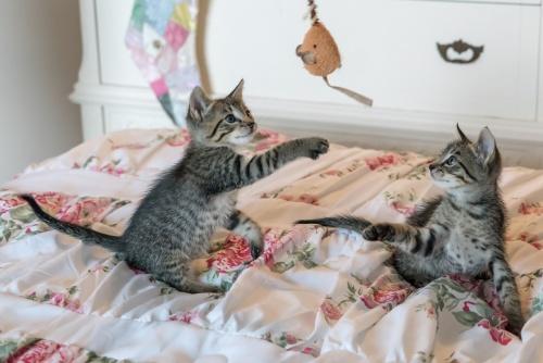 kittens-1534085_1280