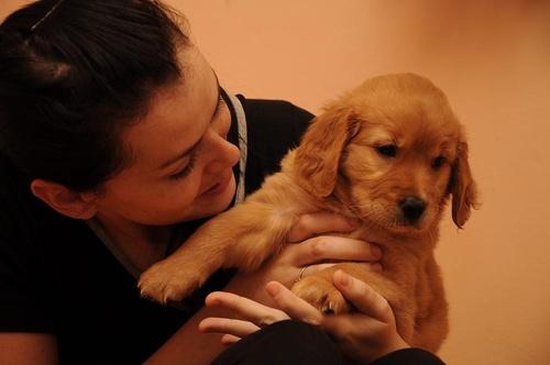terapias-kutya