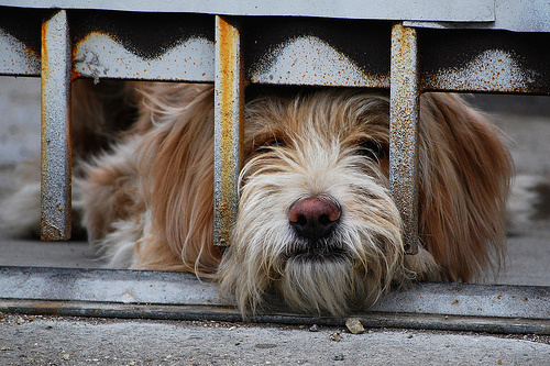 hazorzo-kutya
