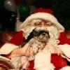 Karácsony: kiskutya ajándékba?