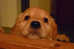 Segítsünk a Siófoki Állatvédő Alapítványnak!